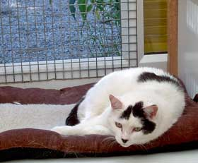 Contented cat at the Happy Cattery